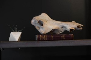 One of many small animal skulls used as décor for a macabre mood